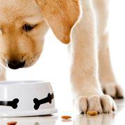 cane cibo
