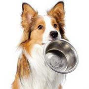 cibo cani