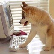 cibo cane online