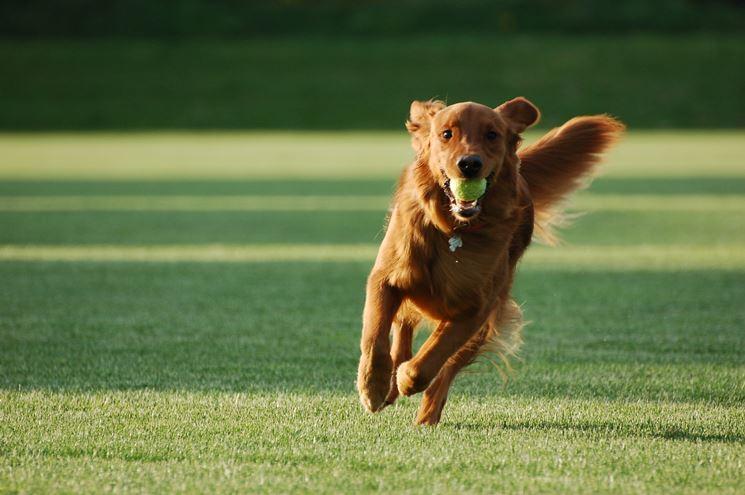 Un cibo secco e completo è ideale per i cani molto attivi