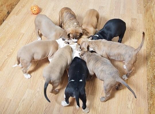 Cibo per cuccioli di cane cani