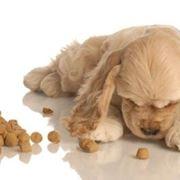 mangime cani
