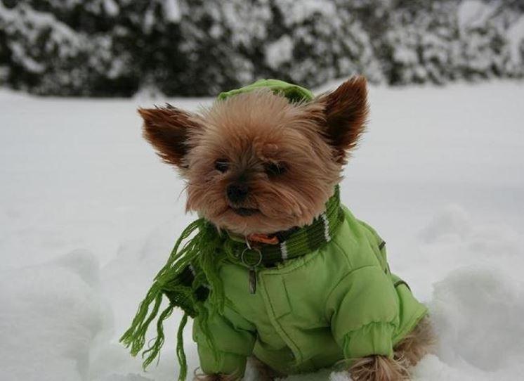 Un cappottino impermeabile tiene lontani freddo e pioggia
