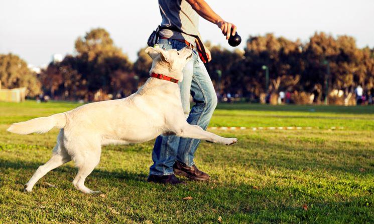 Il gioco affina le capacità fisiche e mentali del cane