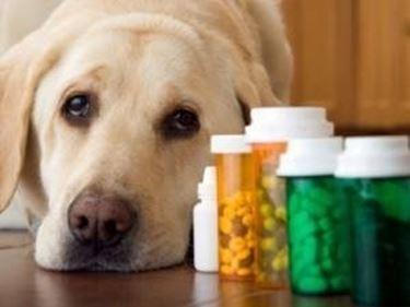 vitamine cani