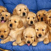 annunci cuccioli