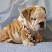 cuccioli cane nascita
