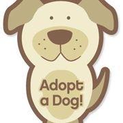 cuccioli adozioni