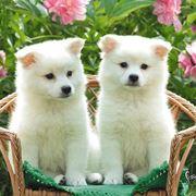 cuccioli in adozione