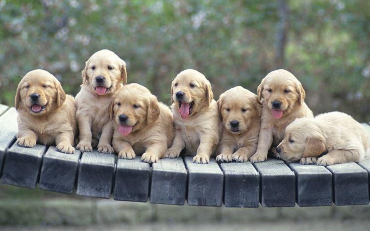 teneri cuccioli