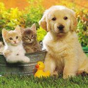cuccioli vendita