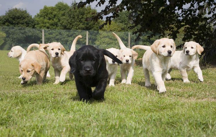 foto cuccioli