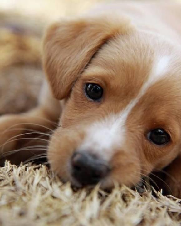 bellezza dei nostri animali. foto cuccioli