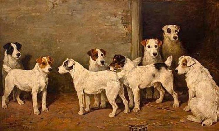 Primi esemplari di fox terrier