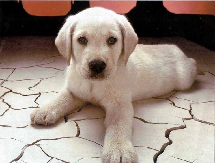 regalo cani