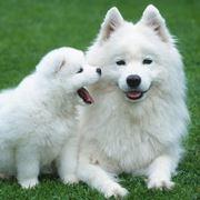 regalo cuccioli cane