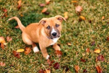 adozioni cane