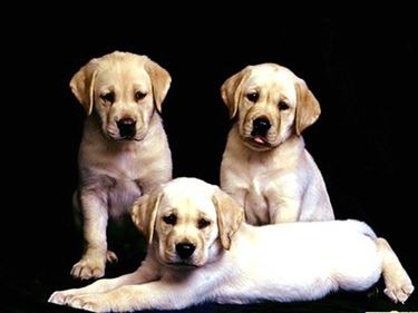 adozioni cani