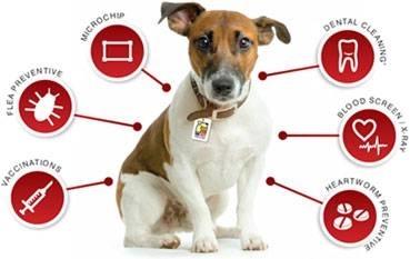 Assicurazione per cani cura cani for Assicurazione domestica