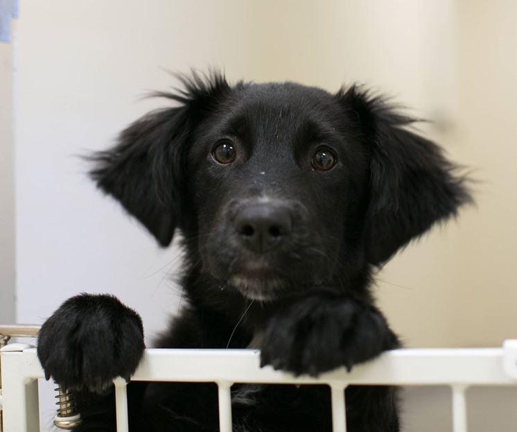 Un cucciolo di cane necessita inizialmente di moltissime cure, affettive ed economiche