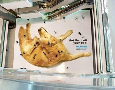 pubblicità frontline di impatto