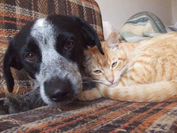 Un cane, in compagnia di un gatto