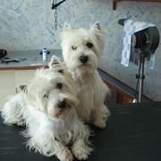 Cani in attesa della toelettatura