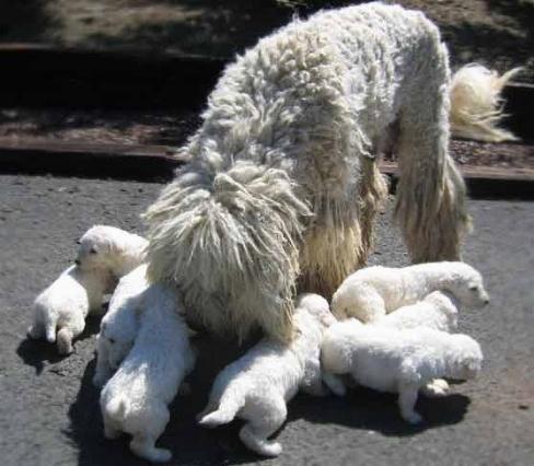 Lavare una cagna dopo il parto - domande e risposte cani