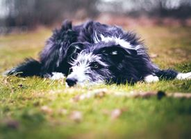 Come allevare un cane meticcio