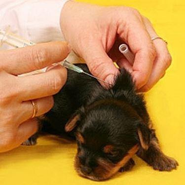 vaccinazioni cane