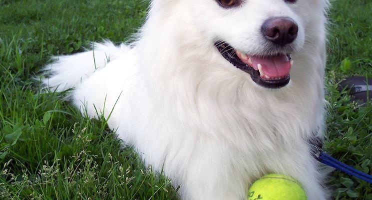animali cane