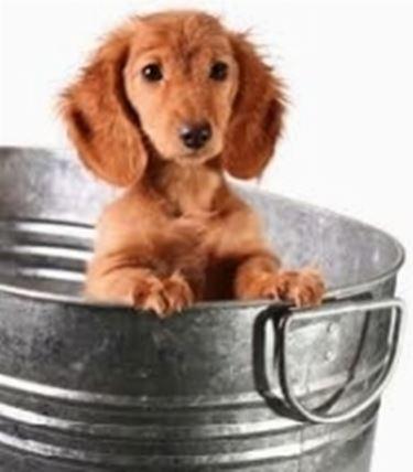 bagnetto cucciolo