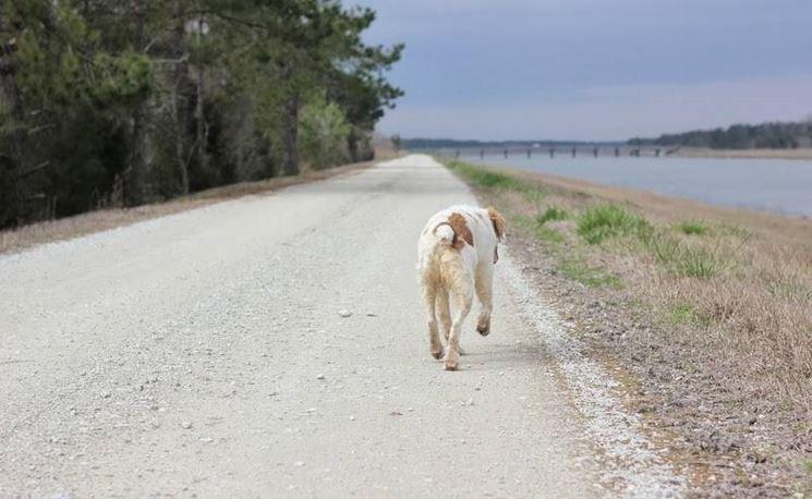cane lungo la strada