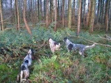 Cani da ricerca