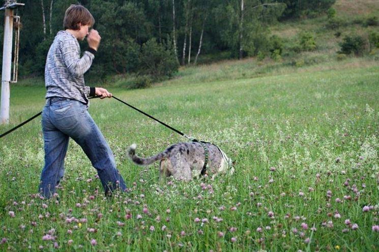 Cani da traccia