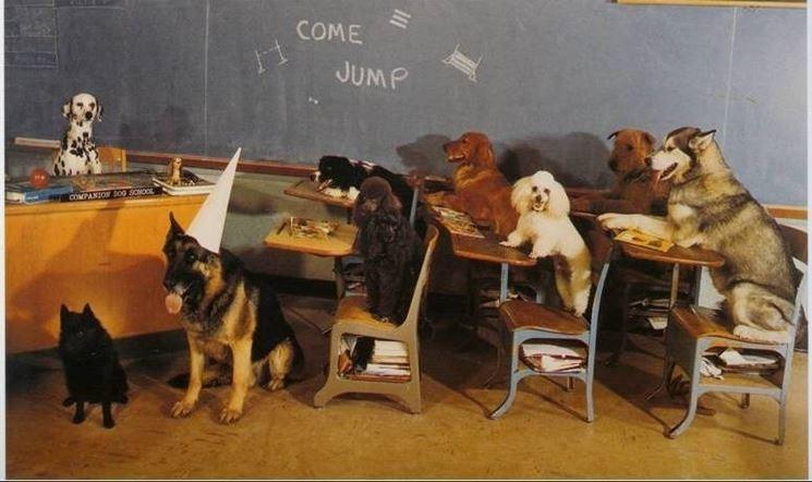 classe di cani
