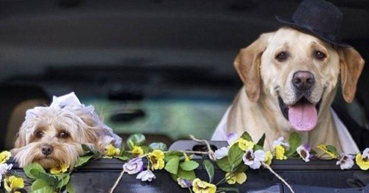 sposi cani