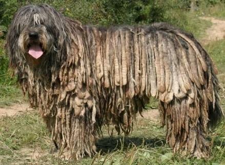 Cura Cani - il Cane