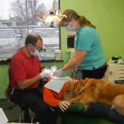 dal dentista con il cane