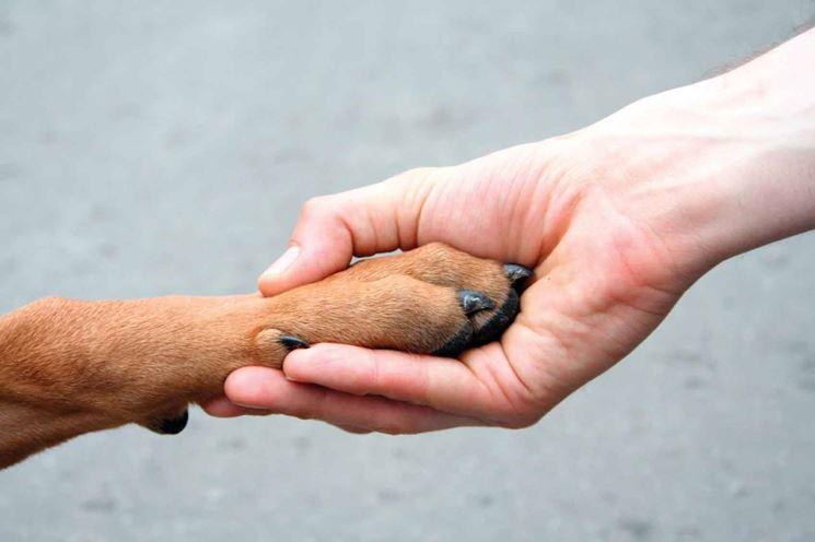 cane amico dell'uomo