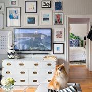 cani in appartamento