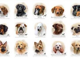 Le razze canine