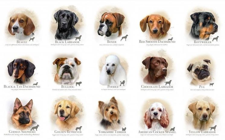 foto razze canine