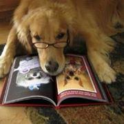 Libro cane
