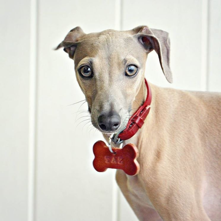 cane con targhetta