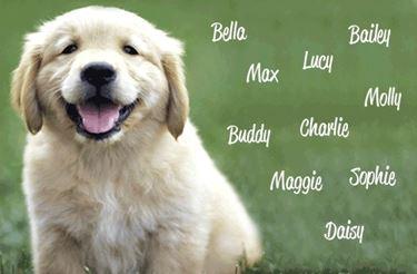 nomi per il cucciolo