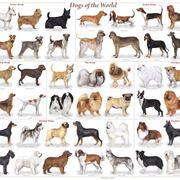 razze cani