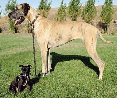 razza cani