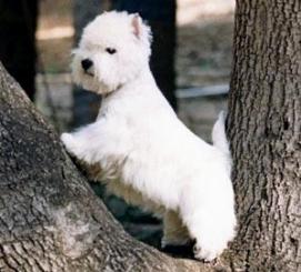a1a80c6b1f3ee6 RoyalCare Giocattoli per cani 12 pacchetti Set regalo, corda a sfera  masticare giocattoli scioccanti per cane da medio a piccolo