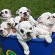 Cesta di cuccioli